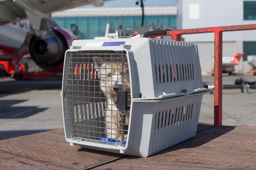 chien dans sa cage de voyage