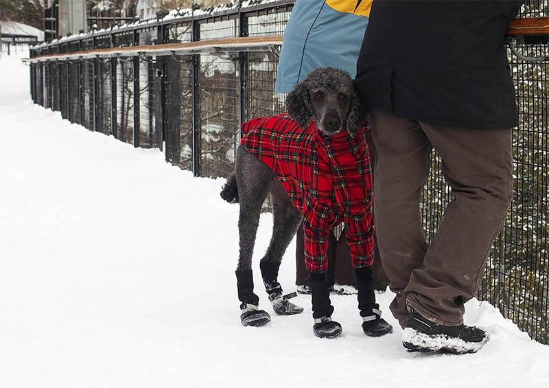chien hiver québec