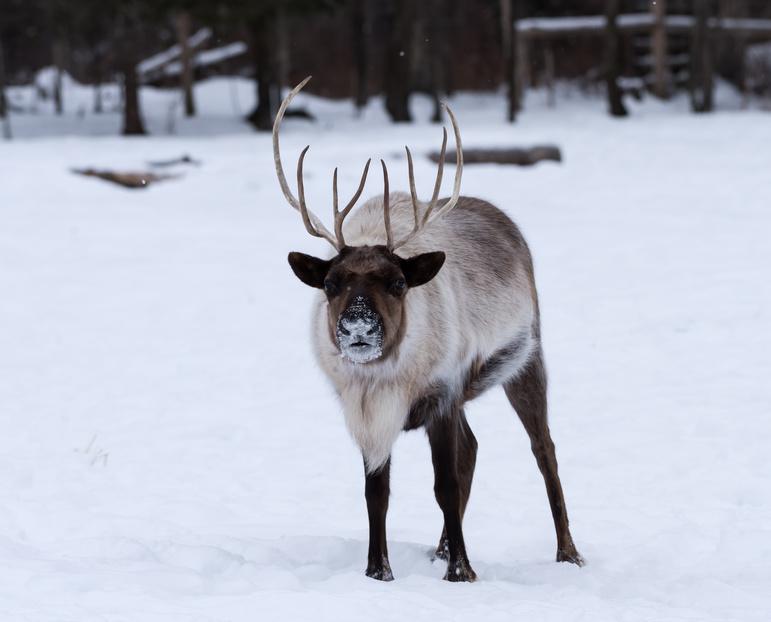 animaux au Canada