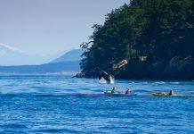 île de Vancouver